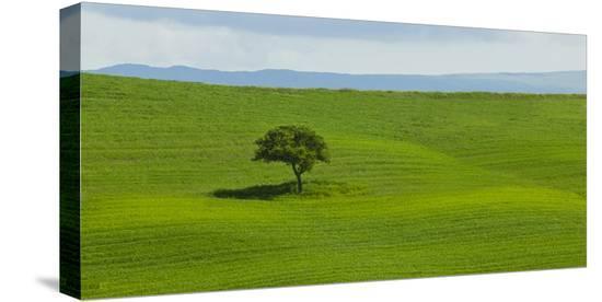 Tuscan Field-Richard Desmarais-Stretched Canvas Print