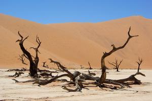 Dead Vlei Namibia by Twentytwo