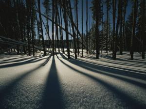 Twilight Tree Shadows on Snow