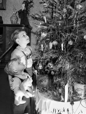 Two Brothers Look at a Christmas Tree in their Living Room in Germany, Ca. 1949