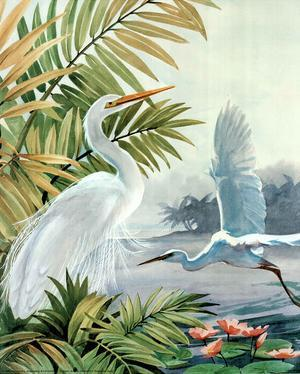 Two Egrets (Animals) Art Print Poster