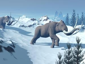 Two Large Mammoths Walking Slowly on the Snowy Mountain