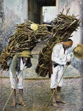 Two Men Carrying Bundles of Wood on their Backs, Mexico, Early 20th Century