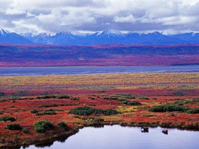 https://imgc.allpostersimages.com/img/posters/two-moose-in-a-pond-with-fall-tundra-denali-national-park-alaska-usa_u-L-P42JGG0.jpg?p=0