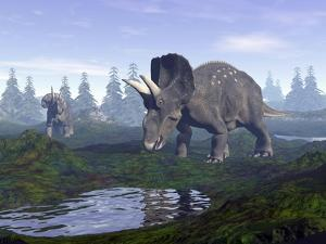Two Nedoceratops Dinosaurs Walking to Water Puddle in the Morning Light