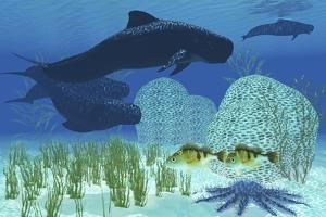 Two Rockfish Watch Cautiously as a Pod of Pilot Whales Swim Past a Coral Reef