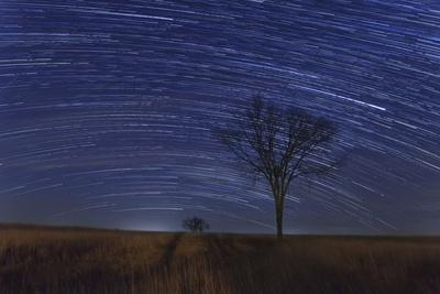 https://imgc.allpostersimages.com/img/posters/two-trees-and-stars_u-L-Q1CA6X30.jpg?artPerspective=n