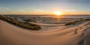 Sand dunes, grass, and driftwood at sunset on the Oregon coast, Oregon, United States of America, N by Tyler Lillico