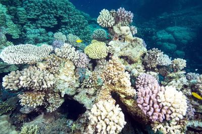 https://imgc.allpostersimages.com/img/posters/typical-healthy-red-sea-hard-coral-reef-landscape-marsa-alam-egypt-north-africa-africa_u-L-PQ8N2B0.jpg?p=0