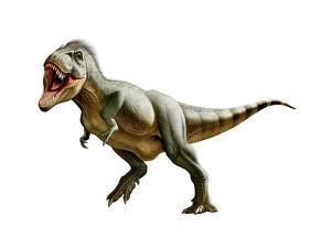 Tyrannosaurus Rex, a Genus of Coelurosaurian Theropod Dinosaur
