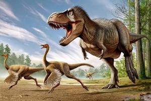 Tyrannosaurus Rex Attacking Two Struthiomimus Dinosaurs