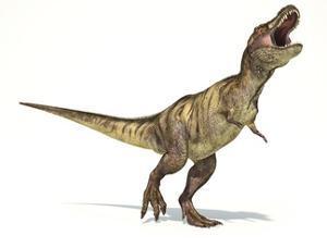 Tyrannosaurus Rex Dinosaur, Artwork
