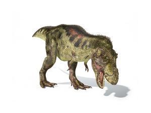 Tyrannosaurus Rex Dinosaur on White Background