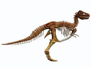 Tyrannosaurus Rex Dinosaur Skeleton
