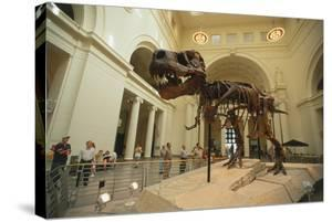 Tyrannosaurus Rex (Sue), Field Museum in Chicago, Illinois, USA