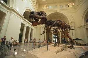 Tyrannosaurus Rex (Sue), Field Museum in Chicago, Illinois, USA