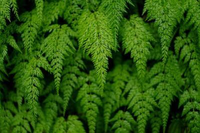 Close-Up of Fern in Forest of Emei Shan by Tyrone Turner