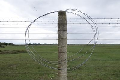 Coiled Barb Wire on a Fence Post