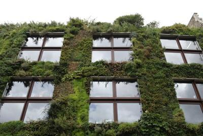 Low Angle View of Plants Growing on a Building
