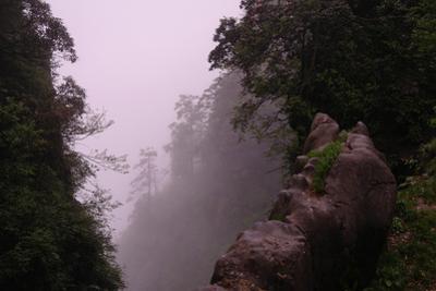 Misty Green Forest of Emei Shan