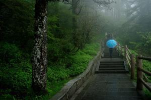 Stairs Lead Up Through a Lush Forest to the Summit of Mount Emei by Tyrone Turner
