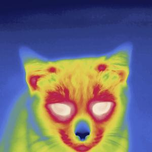 Thermal Image of a Cat by Tyrone Turner