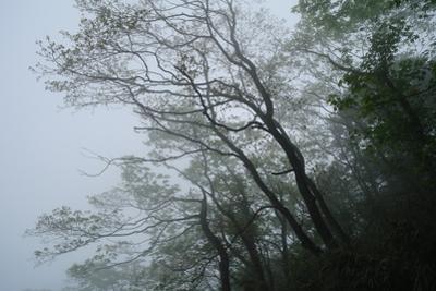 Trees in Mount Emei