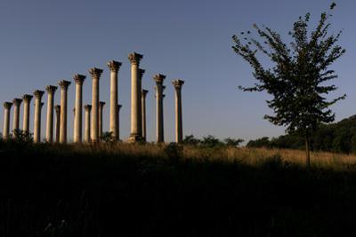 View of Corinthian Columns in National Arboretum