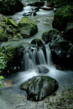 Water Flowing in a Surreal Stream by Tyrone Turner