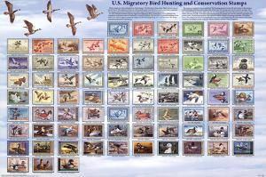 "U.S. Migratory Bird Hunting and Conservation Stamps ""Duck Stamps"" Educational Poster"