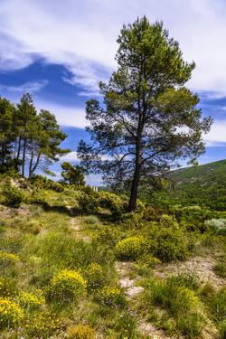 France, Provence, Vaucluse, MŽnerbes, Trail Near Abbaye De Saint-Hilaire by Udo Siebig