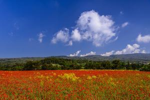 France, Provence, Vaucluse, Roussillon, Poppy Field Against Monts De Vaucluse by Udo Siebig
