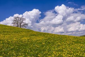 Germany, Bavaria, Upper Bavaria, FŸnfseenland, Jenhausen, Municipality Seeshaupt, Spring Scenery by Udo Siebig