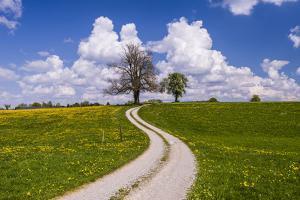 Germany, Bavaria, Upper Bavaria, FŸnfseenland, Schmitten, Municipality Seeshaupt, Spring Scenery by Udo Siebig