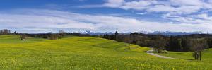 Germany, Bavaria, Upper Bavaria, FŸnfseenland, Wielenbach by Udo Siebig