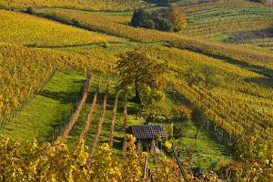 Germany, Hesse, Odenwald (Region), Bergstrasse (Region), Heppenheim (Town by Udo Siebig