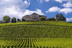 Germany, Hesse, Rheingau (Region), Geisenheim (Village), Johannisberg District by Udo Siebig