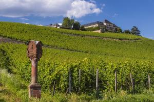Germany, Hessen, Rheingau, Geisenheim, District Johannisberg by Udo Siebig