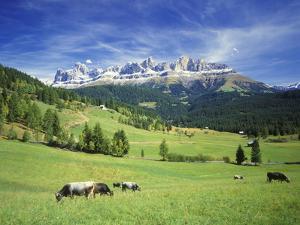 Italy, South Tyrol, Rose Garden Area, Nova Levante, Geiger Alm Rosengarten Group by Udo Siebig