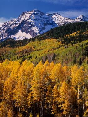 Uncompahgre National Forest CO USA