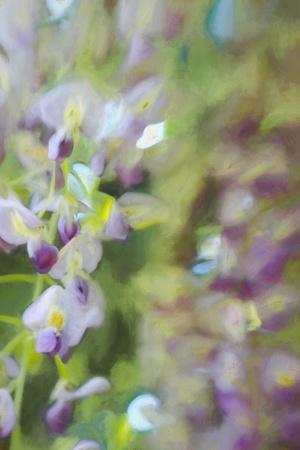 https://imgc.allpostersimages.com/img/posters/under-wisteria-2018_u-L-Q1GTVNH0.jpg?artPerspective=n