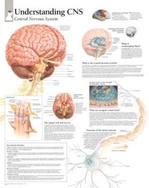 Understanding CNS Educational Chart Poster