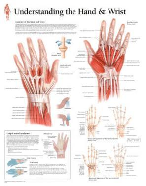 Understanding the Hand and Wrist Educational Chart Poster