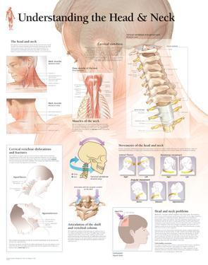 Understanding The Head & Neck