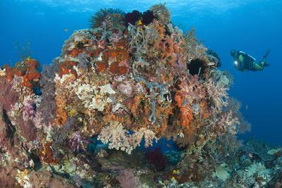 https://imgc.allpostersimages.com/img/posters/underwater-archway-covered-in-soft-corals-raja-ampat-indonesia_u-L-PN90Y00.jpg?p=0