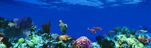 Underwater, Caribbean Sea