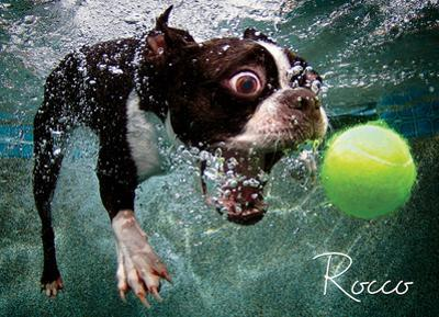Underwater Dog: Rocco 1000 Piece Puzzle