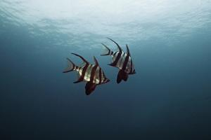 Couple of Fish by underwater graphics