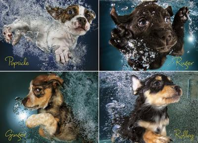 Underwater Puppies 1000 Piece Puzzle
