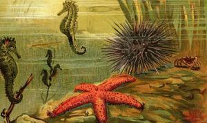 Underwater Scene with Starfish and Seahorses